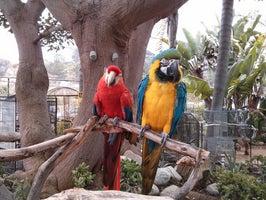 Animal and Bird Hospital of Del Mar
