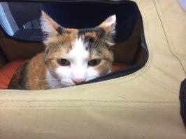 Cat Care Clinic