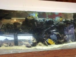 Captain's Choice Fish House