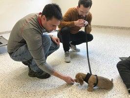 Tucker Pup's Pet Resort