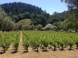 Spring Mountain Vineyard