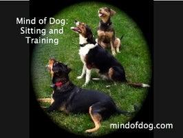 Mind of Dog, LLC