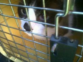 Vetcare animal hospital