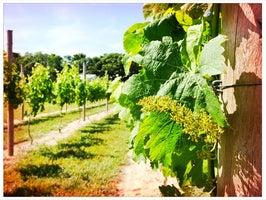 Hawk Haven Winery