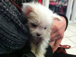 Pocket Puppies Prices Photos Reviews Lincoln Park Chicago Il