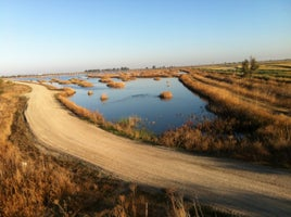 Yolo Bypass Wildlife Viewing Area