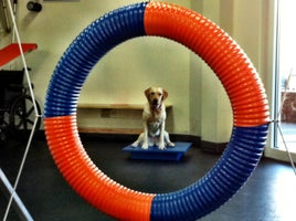 Zoom Room Dog Training - Prices, Photos & Reviews - Austin, TX