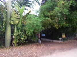 Exotica Rare Fruit Nursery