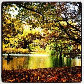 Saxon park photo