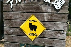 那須アルパカ牧場