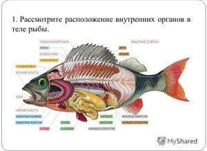 ЮгНИРО (Южный научно-исследовательский институт морского рыбного хозяйства и океанографии)