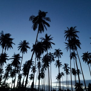 Photo of Courtyard Kauai at Coconut Beach