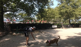 The 15 Best Dog Runs in New York City