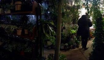 The 11 Best Flower Shops in London