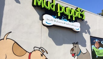 The 7 Best Pet Services in Austin