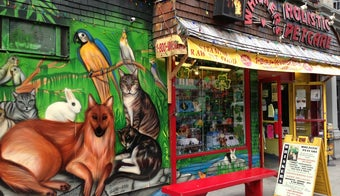 The 15 Best Pet Stores in New York City