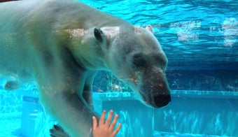 The 15 Best Zoos in Chicago