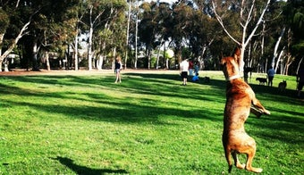 The 11 Best Places for Dog Park in San Diego