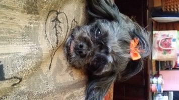 Lynn's Doggie Spa & Grooming