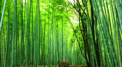 Photo of Trail 竹林の小径 (Arashiyama Bamboo Grove) at 右京区嵯峨小倉山田淵山町, 京都市 616-8394, Japan