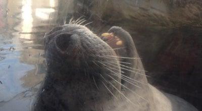 Photo of Aquarium Aquarium Seal Tank at 60 Long Wharf, Boston, MA 02110, United States