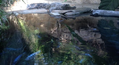 Photo of Arts and Entertainment Pygmy Hippo & Crocodile Exhibit at San Diego Zoo, San Diego, CA, United States