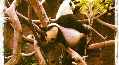 Photo of Arts and Entertainment Baby Panda Exhibit at 2920 Zoo Dr, San Diego, CA 92101, United States