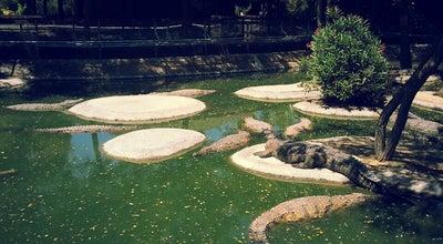 Photo of Nature Preserve Crocodile Park at C/ Cuba, 14, Torremolinos 29620, Spain