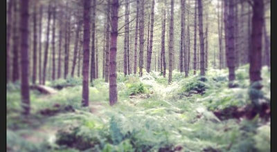 Photo of Outdoors and Recreation Cannock Chase at