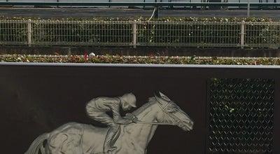 Photo of Racetrack 中京競馬場 ゴール at 間米町敷田1225, 豊明市, Japan