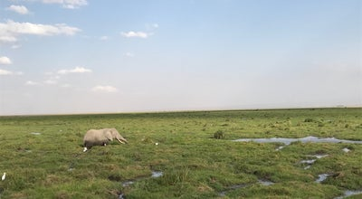 Photo of Park Amboseli National Park Kenya at Kenya