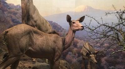 Photo of Arts and Entertainment AMNH Hall of North American Mammals at New York, NY 10024, United States