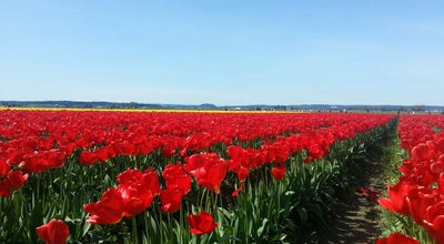 Photo of Farm Roozengaarde Tulip Farm at 15867 Beaver Marsh Road, Mt Vernon, WA 98273, United States