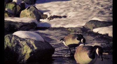 Photo of Lake Spy Pond at Pond Lane, Arlington, MA 02476, United States