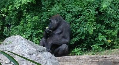 Photo of Zoo Congo Gorilla Forest at The Bronx Zoo, Bronx, NY 10460, United States