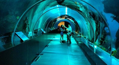 Photo of Aquarium S.E.A. Aquarium at Marine Life Park, Sentosa Island, Singapore