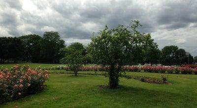 Photo of Park Rheinpark at Rheinparkweg 1, Köln 50679, Germany