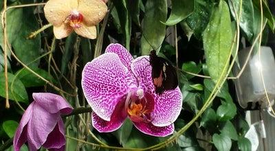 Photo of Botanical Garden Tucson Botanical Gardens at 2150 N. Alvernon Way, Tucson, AZ 85712, United States