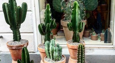 Photo of Flower Shop Kaktus københavn at Denmark