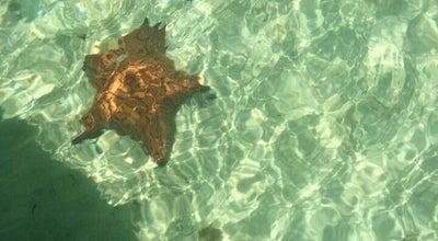 Photo of Resort Andros Island Beach Resort at Main Lumber Road, Conch Sound, Bahamas