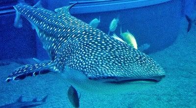 Photo of Aquarium Osaka Aquarium Kaiyukan at 港区海岸通1-1-10, Osaka 552-0022, Japan