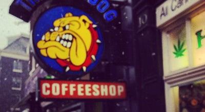 Photo of Cafe The Bulldog Rock Shop at Singel 12, Amsterdam 1013 GA, Netherlands