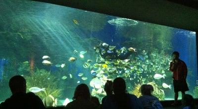 Photo of Arts and Entertainment aquarium dive show at Gatlinburg, TN 37738, United States