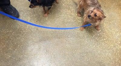 Photo of Pet Store PetSmart at 919 Lakeland Park Center Dr, Lakeland, FL 33809, United States
