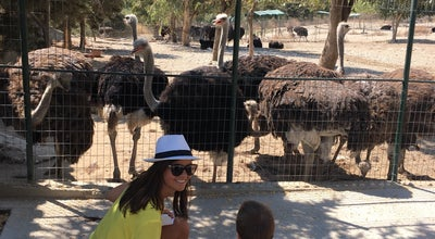 Photo of Farm Rhodes Ostrich Farm and Park at Rhodes 85106, Greece