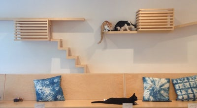 Photo of American Restaurant KitTea Cat Cafe at 96 Gough St, San Francisco, CA 94102, United States