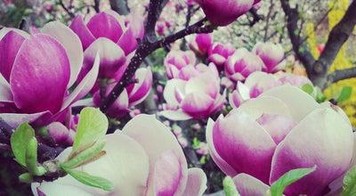 Photo of Botanical Garden Ботанічний сад ім. О. Фоміна / O. Fomin Botanical Garden at Вул. С. Петлюри, 1, Київ 01032, Ukraine