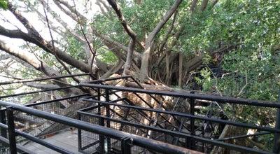 Photo of Historic Site Anping Tree House at 安平區古堡街106, 108號, Tainan 708, Taiwan