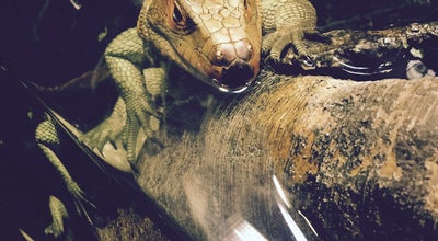 Photo of Arts and Entertainment Reptile House at The Bronx Zoo, Bronx, NY 10460, United States