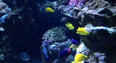 Photo of Aquarium Aquarium of The Pacific at 100 Aquarium Way, Long Beach, CA 90802, United States